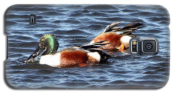 Shoveler Duck 1 Galaxy S5 Case