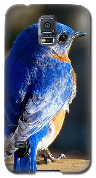 Showing Off My Beautiful Blue Feathers In The Sunlight Galaxy S5 Case
