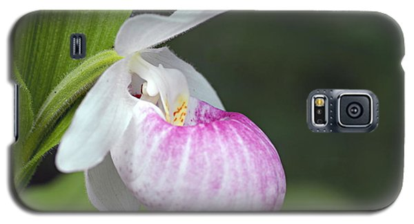 Showy Ladyslipper Galaxy S5 Case