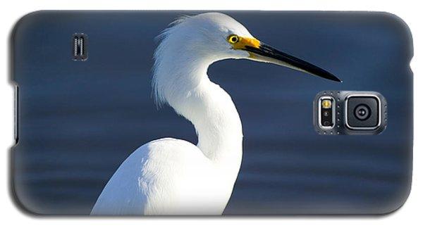 Showy Snowy Egret Galaxy S5 Case by Rich Franco