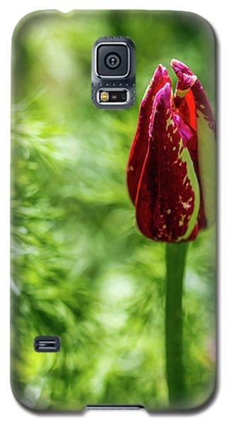 Shy Tulip Galaxy S5 Case