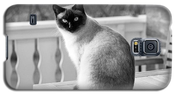 Siamese Cat Galaxy S5 Case