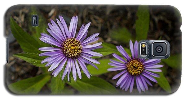 Siberian Aster Galaxy S5 Case
