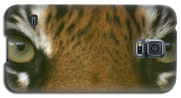 Siberian Eyes - Tiger Galaxy S5 Case
