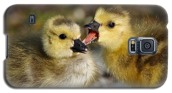 Sibling Love - Baby Canada Geese Galaxy S5 Case