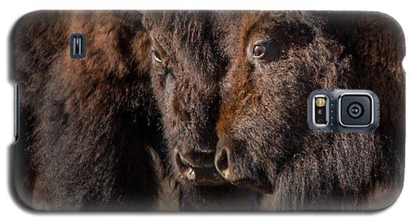 Siblings // Lamar Valley, Yellowstone National Park Galaxy S5 Case