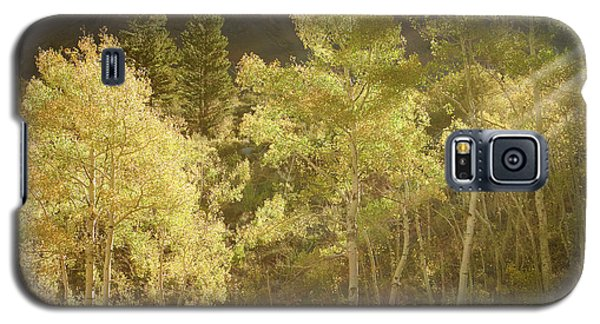 Galaxy S5 Case featuring the photograph Side-lit Aspens - Autumn In Eastern Sierra California by Ram Vasudev