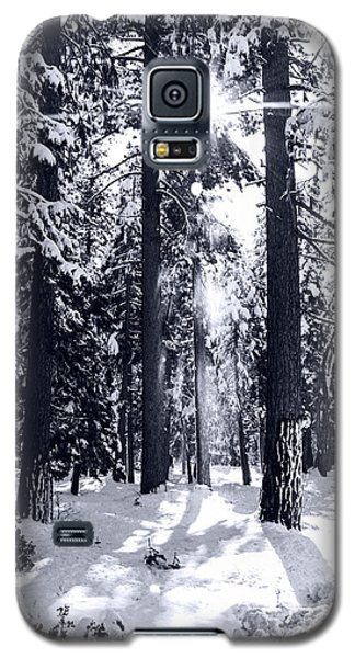 Sierra Forest Show Galaxy S5 Case by William Havle
