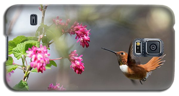 Sign Of Spring 3 Galaxy S5 Case by Randy Hall