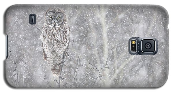Galaxy S5 Case featuring the photograph Silent Snowfall Landscape by Everet Regal