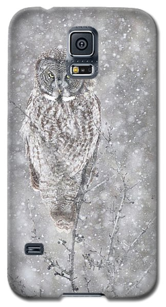 Galaxy S5 Case featuring the photograph Silent Snowfall Portrait by Everet Regal