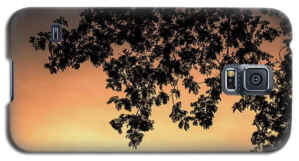 Silhouette Tree In The Dawn Sky Galaxy S5 Case
