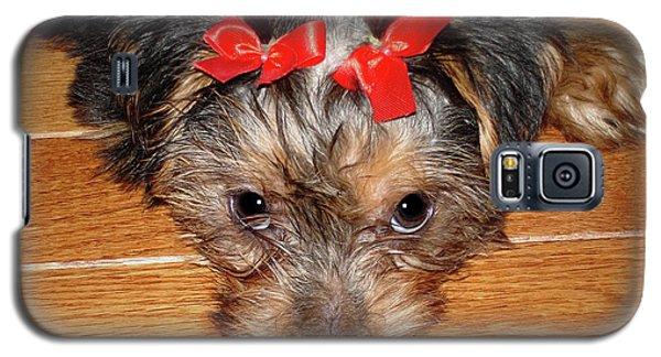 Silky Terrier Puppy Face Galaxy S5 Case
