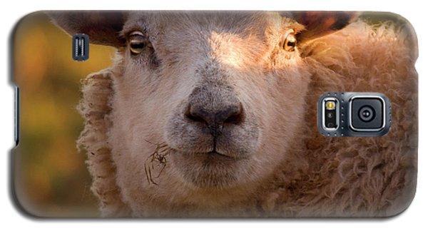 Sheep Galaxy S5 Case - Silly Face by Angel Ciesniarska