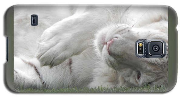 Silly Kitty Galaxy S5 Case