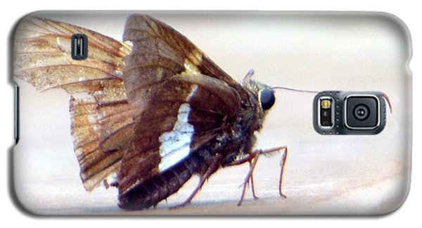 Silver Spotted Skipper Butterfly Galaxy S5 Case