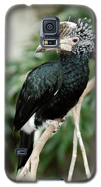 Silvery Cheeked Hornbill Galaxy S5 Case