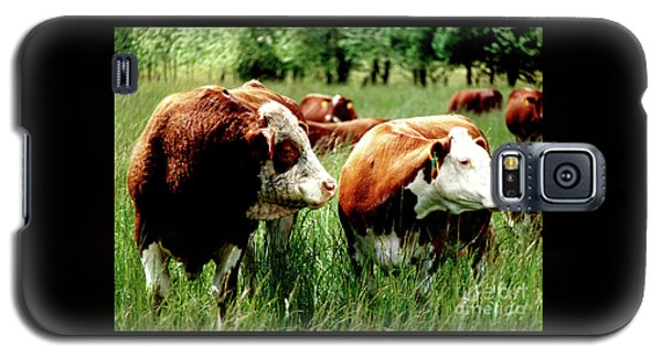 Simmental Bull And Hereford Cow Galaxy S5 Case