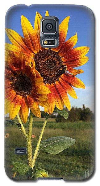 Sunflower  Beauty Galaxy S5 Case