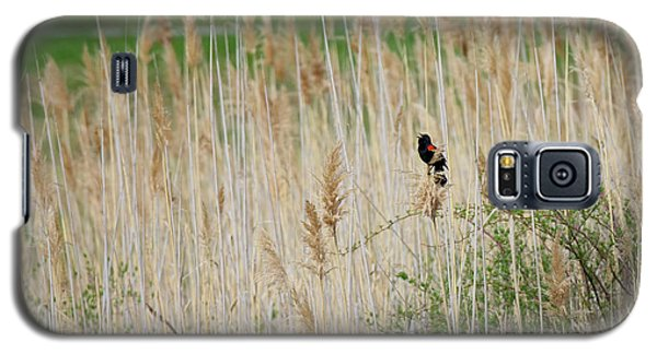 Galaxy S5 Case featuring the photograph Sing For Spring by Bill Wakeley