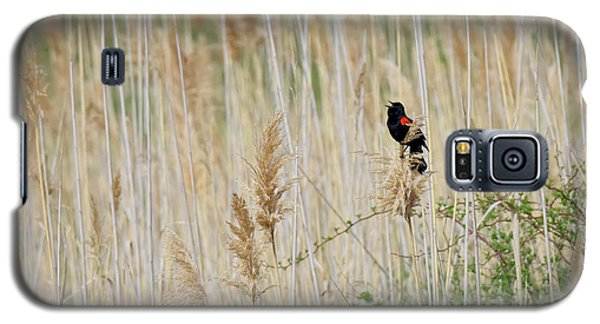 Galaxy S5 Case featuring the photograph Sing For Spring Square by Bill Wakeley