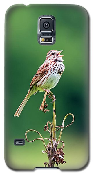 Singing Song Sparrow Galaxy S5 Case
