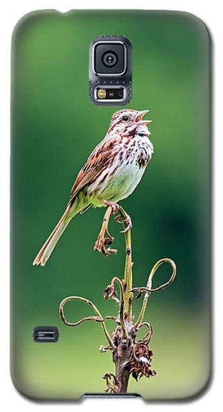 Singing Song Sparrow Galaxy S5 Case by Jennifer Nelson
