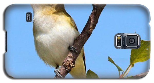 Galaxy S5 Case featuring the photograph Singing Vireo by Debbie Stahre