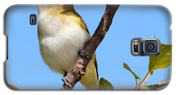 Singing Vireo Galaxy S5 Case by Debbie Stahre