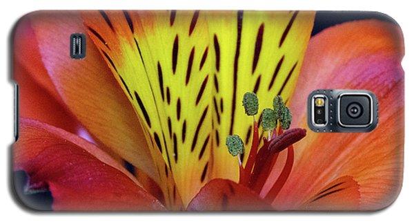 Single Alstroemeria Inca Flower-1 Galaxy S5 Case