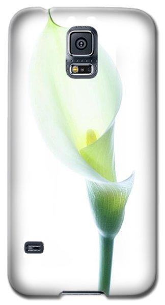Single Cala Color Galaxy S5 Case by Rebecca Cozart