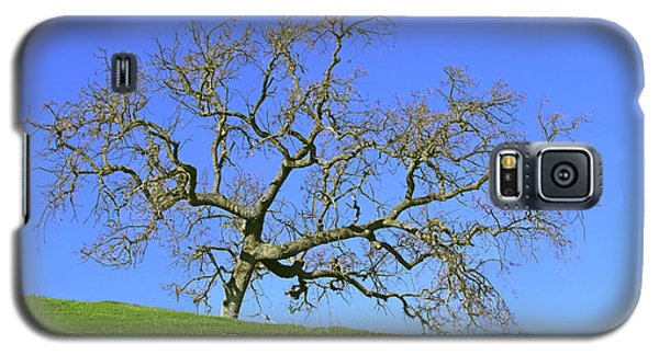Galaxy S5 Case featuring the photograph Single Oak Tree by Art Block Collections