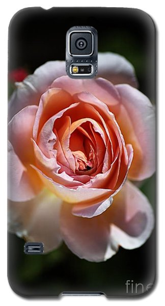 Single Romantic Rose  Galaxy S5 Case