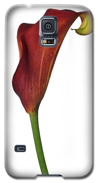Single Rust Calla Lily Stem Galaxy S5 Case by Heather Kirk