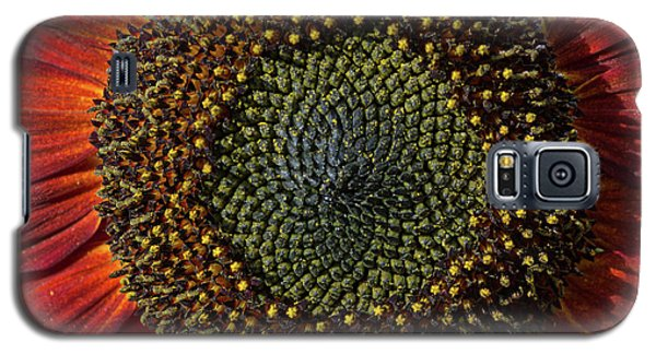 Single Sun Flower Galaxy S5 Case