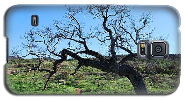 Single Tree Over Narrow Path Galaxy S5 Case