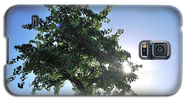 Single Tree - Sun And Blue Sky Galaxy S5 Case by Matt Harang