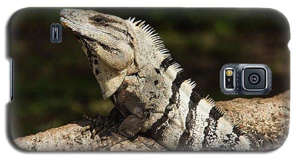 Sir Iguana Mexican Art By Kaylyn Franks Galaxy S5 Case