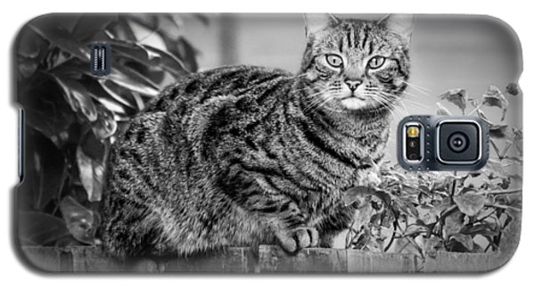 Sitting On The Fence Galaxy S5 Case