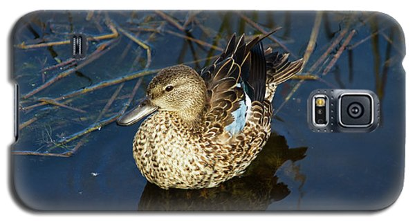 Galaxy S5 Case featuring the photograph Sitting Pretty by Arthur Dodd