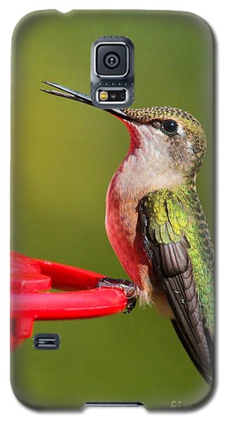 Sitting Pretty Galaxy S5 Case by Debbie Stahre