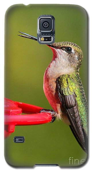 Galaxy S5 Case featuring the photograph Sitting Pretty by Debbie Stahre