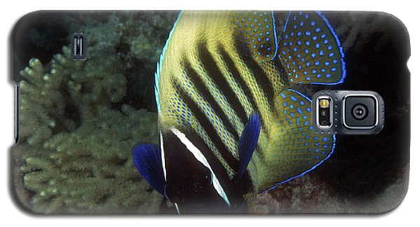 Six Banded Angelfish, Great Barrier Reef Galaxy S5 Case