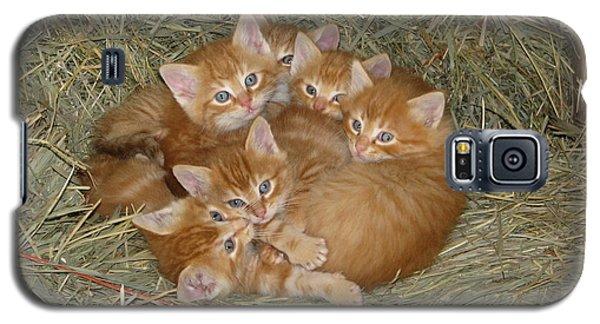 Six Kittens Galaxy S5 Case