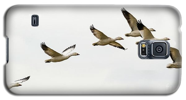 Galaxy S5 Case featuring the photograph Six Snowgeese Flying by Mike Dawson