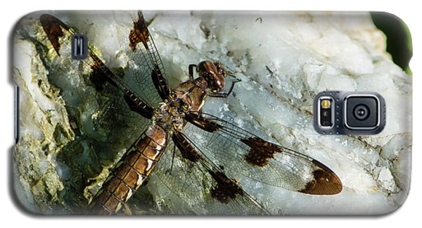 Six Spotted Dragonfly Galaxy S5 Case