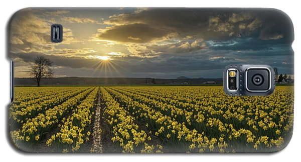 Galaxy S5 Case featuring the photograph Skagit Daffodils Golden Sunstar Evening by Mike Reid