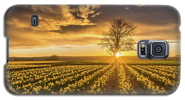 Galaxy S5 Case featuring the photograph Skagit Valley Daffodils Sunset by Mike Reid