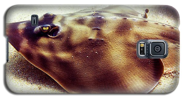 Galaxy S5 Case featuring the photograph Skate by Anthony Jones