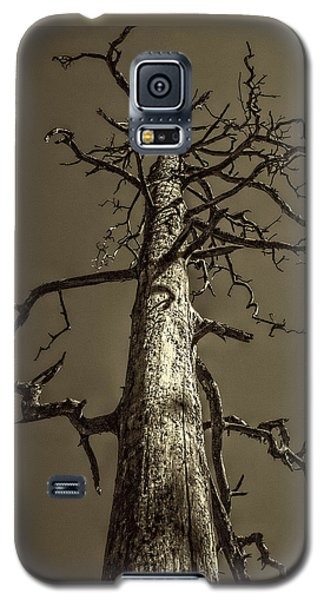 Skeletal Tree Sedona Arizona Galaxy S5 Case